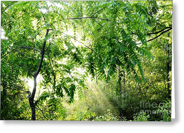 Sun Breakthrough Greeting Cards - Sun Rays through Black Walnut Leaves Greeting Card by Thomas R Fletcher