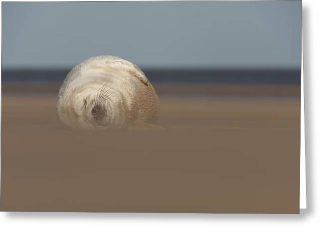 Sun Sea and Sand Greeting Card by Andy Astbury