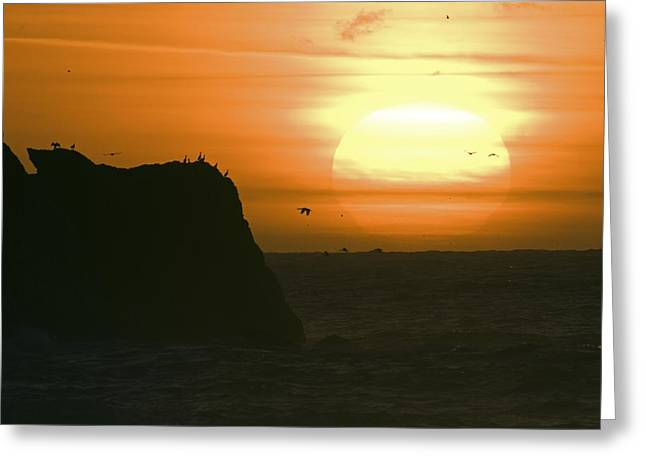 Big Sur California Greeting Cards - Sun Setting With Flying Birds Greeting Card by Rich Reid