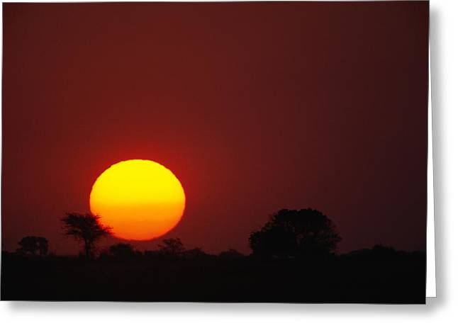Concept Photographs Greeting Cards - Sun, Twilight View Greeting Card by Beverly Joubert