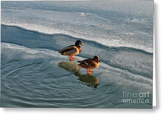 Ducks Digital Art Greeting Cards - Sunbath on Ice Greeting Card by Jutta Maria Pusl