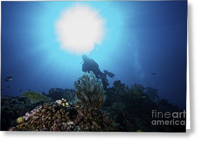 Undersea Photography Greeting Cards - Sunburst Above A Diver Amongst Greeting Card by Terry Moore