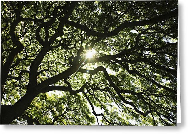 Expanding Light Greeting Cards - Sunburst Through Tree Greeting Card by Brandon Tabiolo - Printscapes