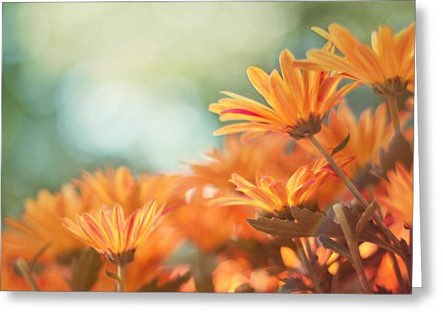 Chrysanthemum Greeting Cards - Sundance Greeting Card by Amy Tyler