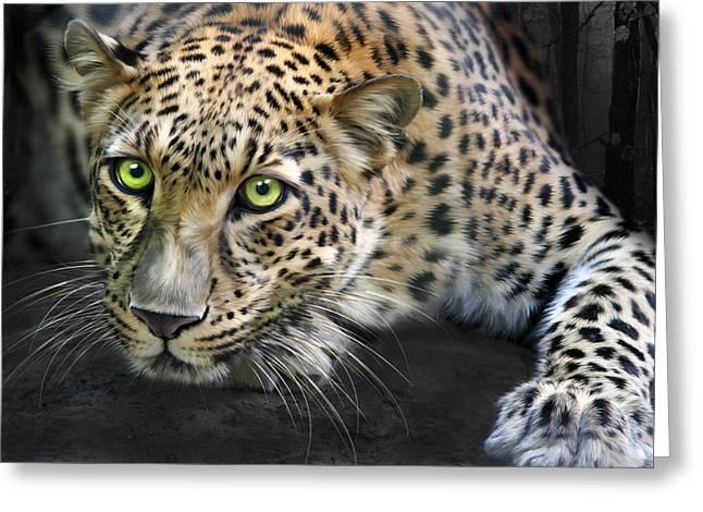 Big Cat Rescue Greeting Cards - Sundari Greeting Card by Big Cat Rescue