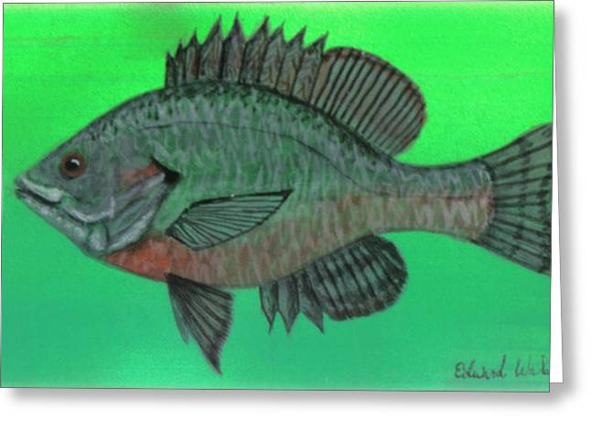 Wahoo Greeting Cards - Sunfish Greeting Card by Edward Walsh