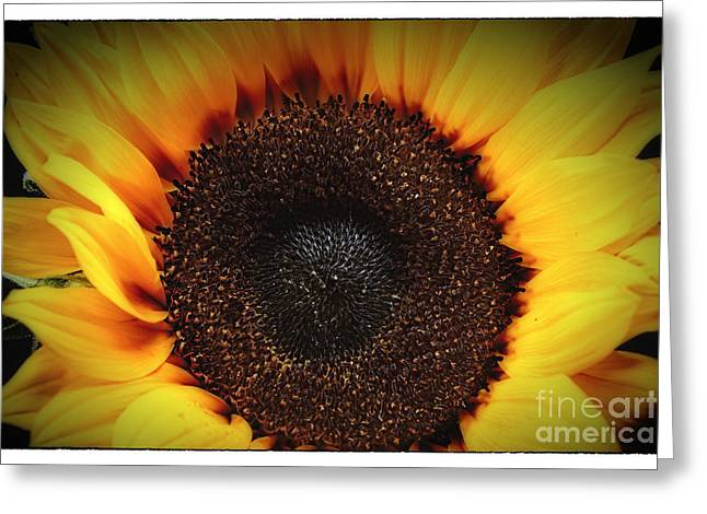 Studio Lighting Greeting Cards - Sunflare Greeting Card by George Oze