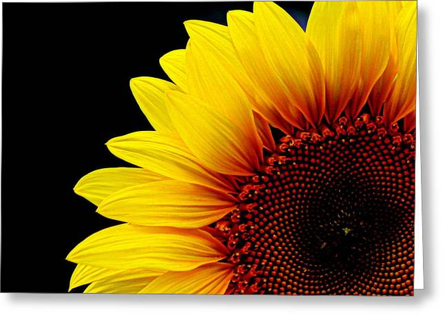 Sunflower Photograph Greeting Cards - Sunflower - 2 Greeting Card by Tam Graff