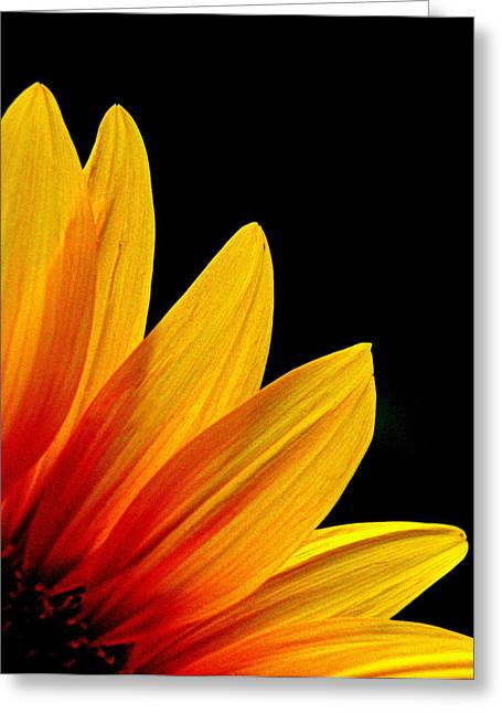 Floral Photographs Greeting Cards - Sunflower - 4 Greeting Card by Tam Graff
