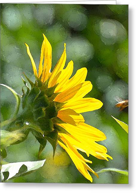 Sunflower 3 Greeting Card by Pamela Cooper