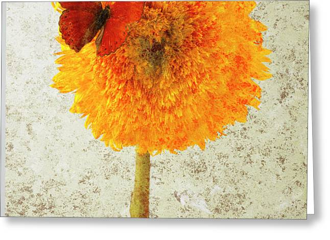 Sunflower and red butterfly Greeting Card by Garry Gay