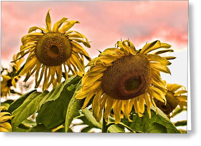 Topaz Greeting Cards - Sunflower Art 1 Greeting Card by Edward Sobuta