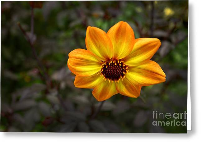 Yellow Flowers Stretched Prints Greeting Cards - Sunflower at Sunset Greeting Card by M K  Miller
