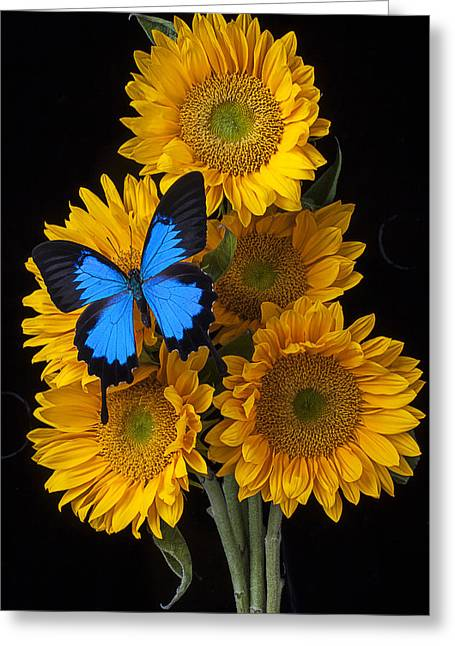 Five Greeting Cards - Sunflower bouquet  Greeting Card by Garry Gay