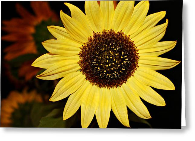 Yellow Sunflower Greeting Cards - Sunflower Greeting Card by Cathie Tyler