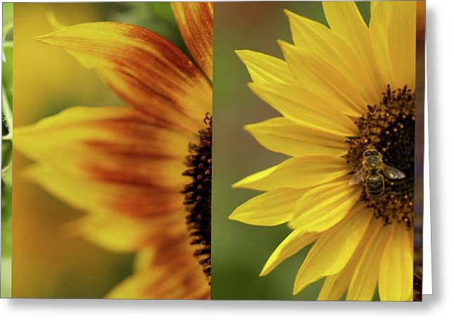 Yellow Sunflower Greeting Cards - Sunflower Collage  Greeting Card by Brooke Roby