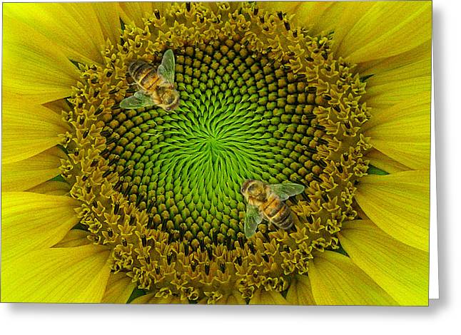 Yellow Sunflower Greeting Cards - Sunflower Dance II Greeting Card by Doug Kreuger