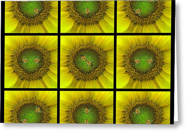 Yellow Sunflower Greeting Cards - Sunflower Dance III Greeting Card by Doug Kreuger