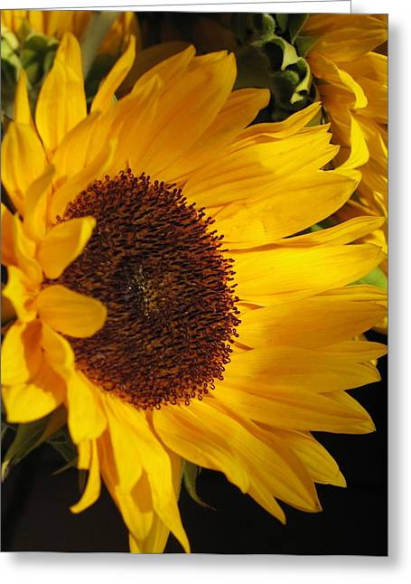 Dappled Light Greeting Cards - Sunflower--Dappled Light Greeting Card by Vikki Bouffard