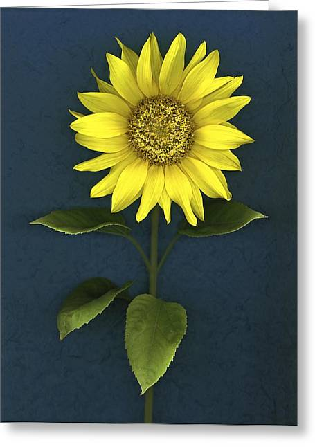 Sunflower Greeting Card by Deddeda