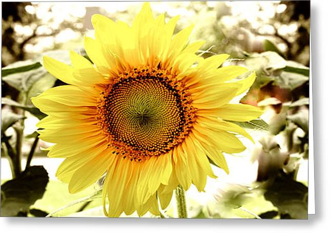 Sunflower Greeting Card by Photography Art