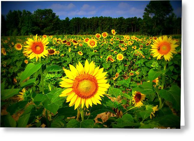 Sunflower Patch Greeting Cards - Sunflower Field Greeting Card by Melessia  Todd
