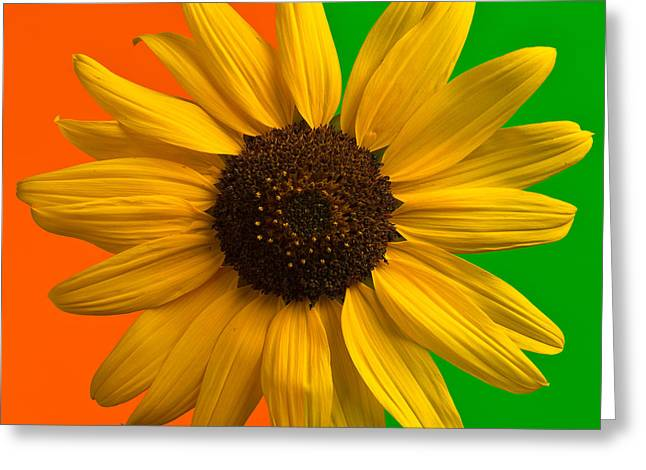 Pop Photographs Greeting Cards - Sunflower In Orange and Green Greeting Card by Steve Gadomski