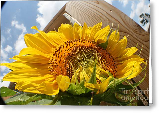 Photograph Tapestries - Textiles Greeting Cards - Sunflower In The Breeze Greeting Card by David Houston
