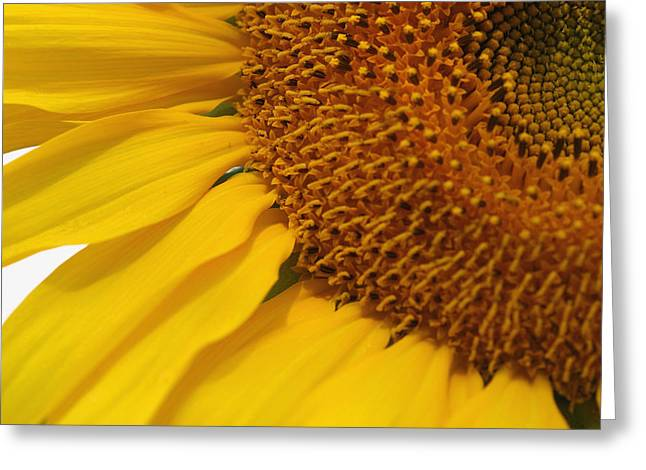 Sunflower Greeting Card by Joan Powell