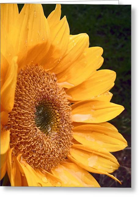 Adam Baldwin Greeting Cards - Sunflower  Greeting Card by Jon Baldwin  Art