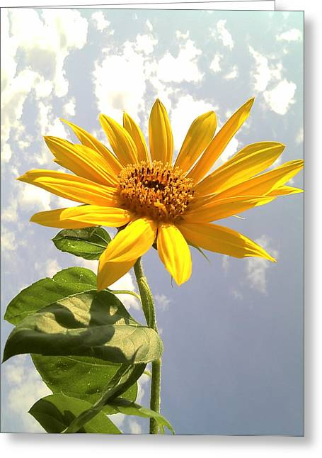 Floral Photographs Pyrography Greeting Cards - Sunflower Greeting Card by Marilyn Sargent