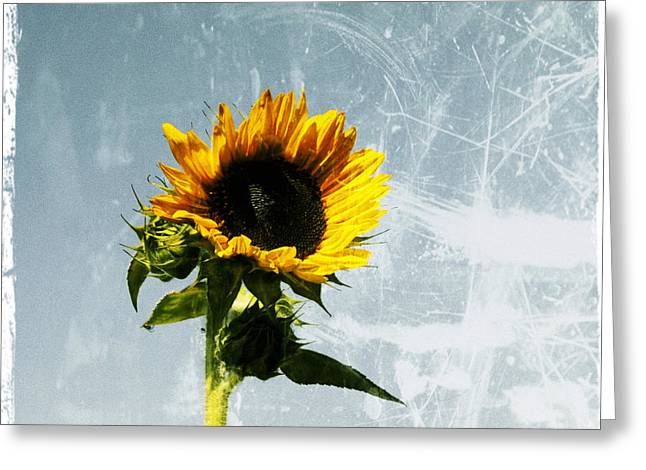 Yellow Sunflower Digital Greeting Cards - Sunflower of Grunge Greeting Card by Cathie Tyler