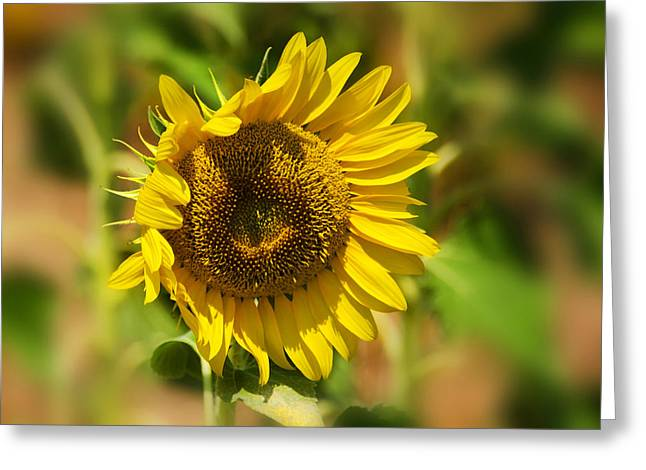 Sunflower Patch Greeting Cards - Sunflower Patch II Greeting Card by Lisa Moore