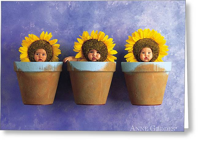 Garden Greeting Cards - Sunflower Pots Greeting Card by Anne Geddes