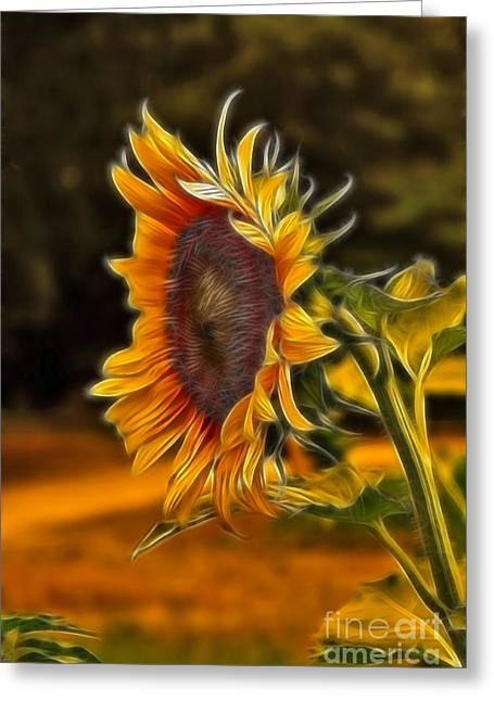Sunflowers Greeting Cards - Sunflower Series Greeting Card by Wendy Mogul