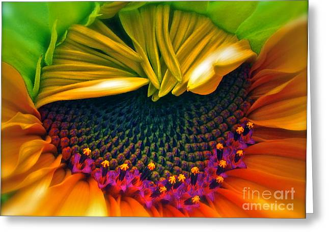 Sunny Decor Greeting Cards - Sunflower Smoothie Greeting Card by Gwyn Newcombe