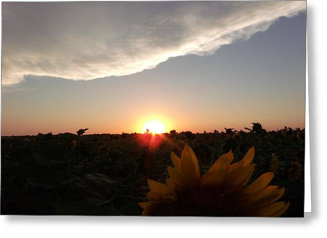Sunflower Sunset Greeting Card by Brian  Maloney