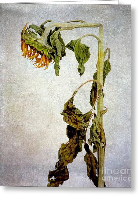Interior Still Life Photographs Greeting Cards - Sunflower textured Greeting Card by Bernard Jaubert
