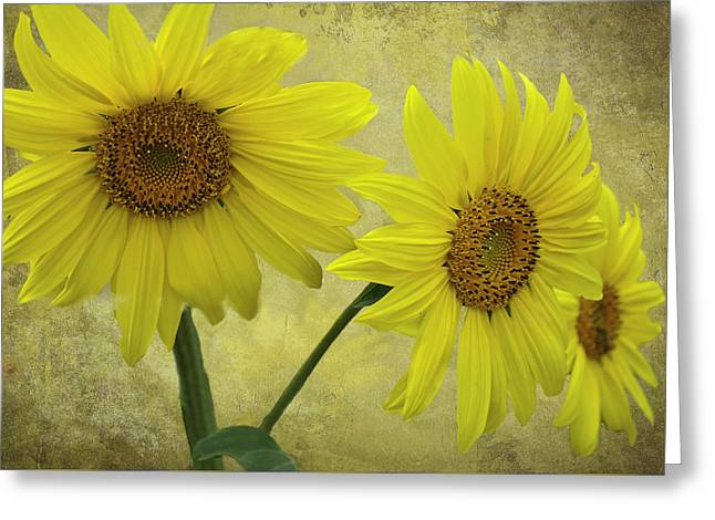 Yellow Sunflower Greeting Cards - Sunflower Trio Greeting Card by Diane Schuster