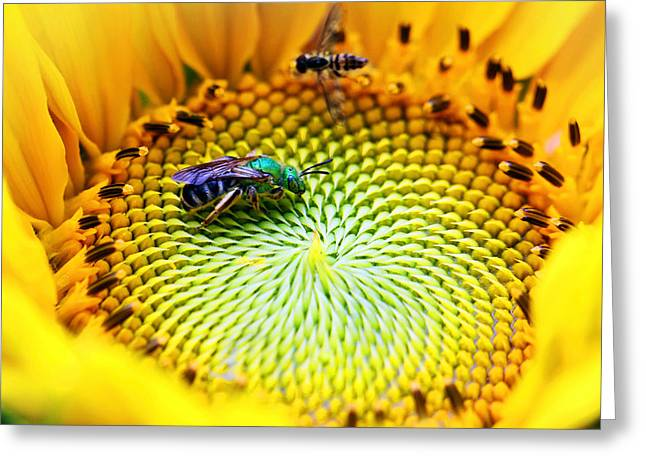 Yellow Sunflower Pyrography Greeting Cards - Sunflower with Sweat Bee Greeting Card by Brian Lee