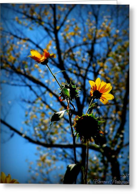 Prescott Greeting Cards - Sunflowers and Autumn Colors Greeting Card by Aaron Burrows