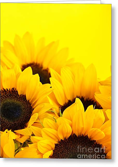 Flowering Greeting Cards - Sunflowers Greeting Card by Elena Elisseeva