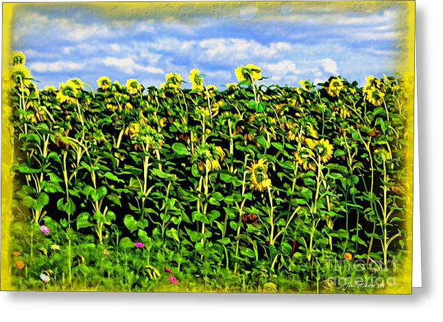 Sunflower Patch Greeting Cards - Sunflowers in France Greeting Card by Joan  Minchak