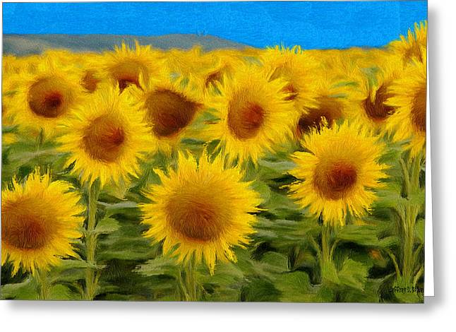 Yellow Sunflower Greeting Cards - Sunflowers in the Field Greeting Card by Jeff Kolker