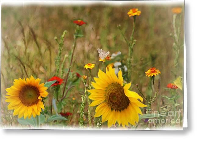 John Kolenberg Greeting Cards - Sunflowers In  The  Wild  Greeting Card by John  Kolenberg
