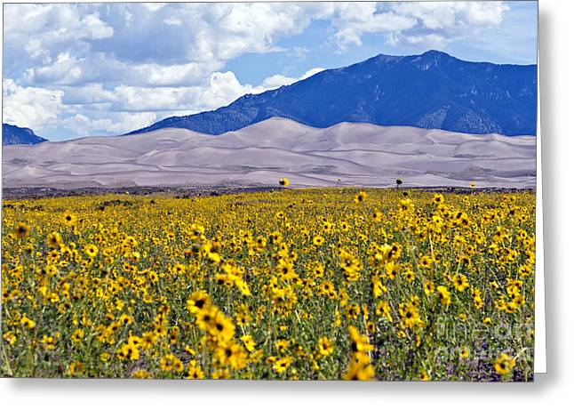 Great Sand Dunes National Preserve Greeting Cards - Sunflowers on the Great Sand Dunes Greeting Card by Scotts Scapes