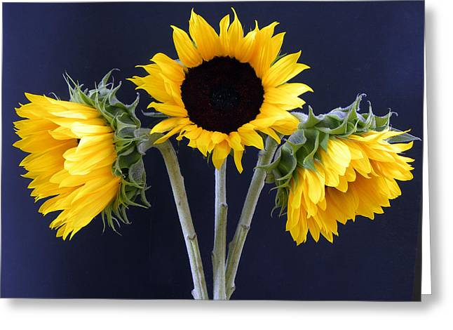 Sunflowers Three Greeting Card by Sandi OReilly