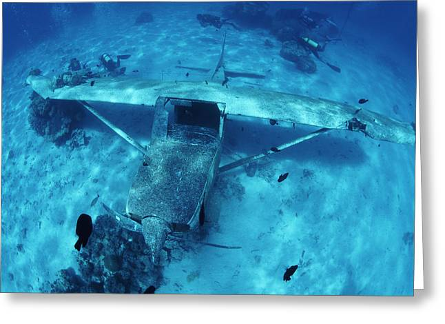 Underwater Breathing Greeting Cards - Sunken Plane Greeting Card by Alexis Rosenfeld