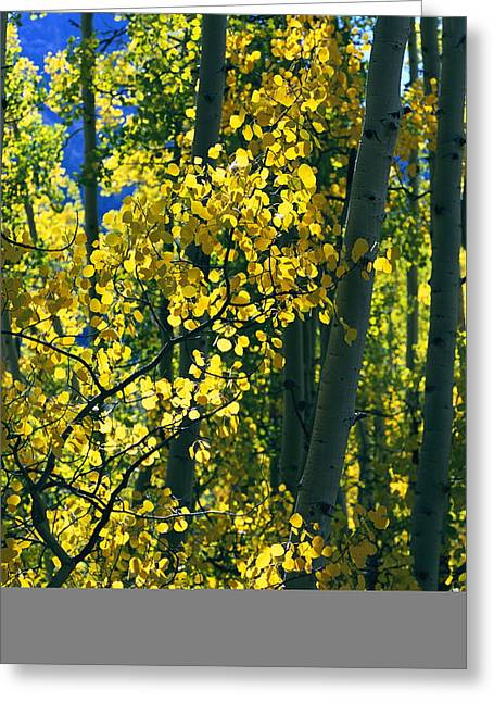 Woodland Scenes Greeting Cards - Sunlight Filters Through The Autumn Greeting Card by Melissa Farlow