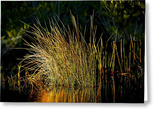 Wildlife Refuge. Greeting Cards - Sunlight on Grass Merritt Island NWR Greeting Card by Rich Franco